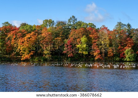 Autumnal forest near the lake. Trees with red, yellow and green leaves. - stock photo