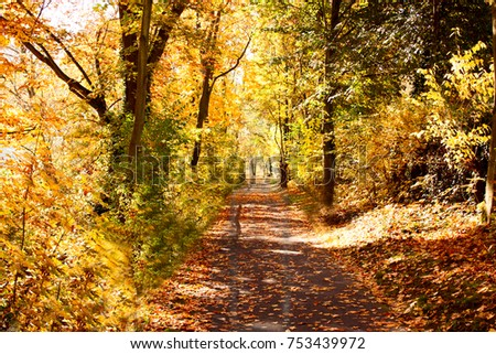 Autumnal forest trail