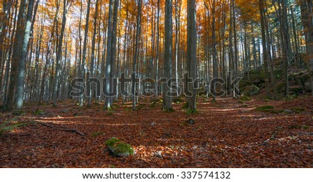 autumnal forest with red and yellow foliage