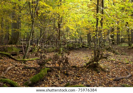Autumnal landscape of mixed stand with broken trees lying - stock photo