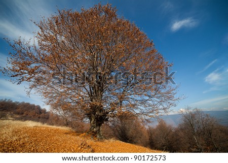 Autumnal landscape with a big beech tree and blue sky