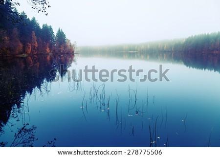 Autumnal landscape with threes on a coast, fog and still lake, blue tonal filter photo correction - stock photo