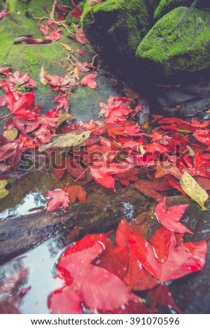 Autumnal leaf background, Slightly red maple leaves