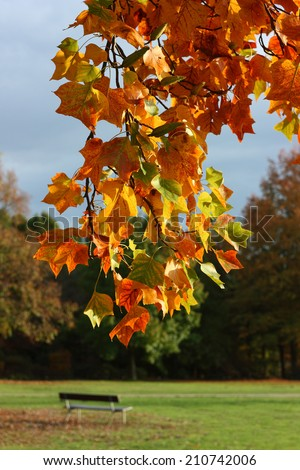 Autumnal leaves. Autumn leaves on a branch in the sunlight in the city park. - stock photo