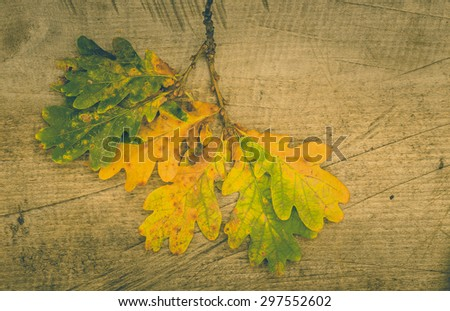autumnal leaves background. vintage backgroud - stock photo
