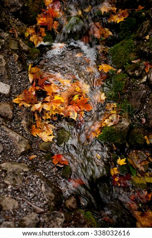 autumnal leaves on the water, autumn landscape