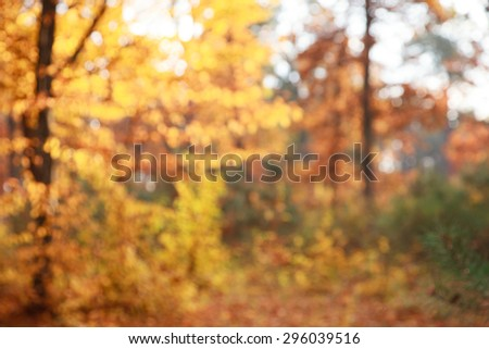 autumnal natural bokeh with sun  background  - stock photo
