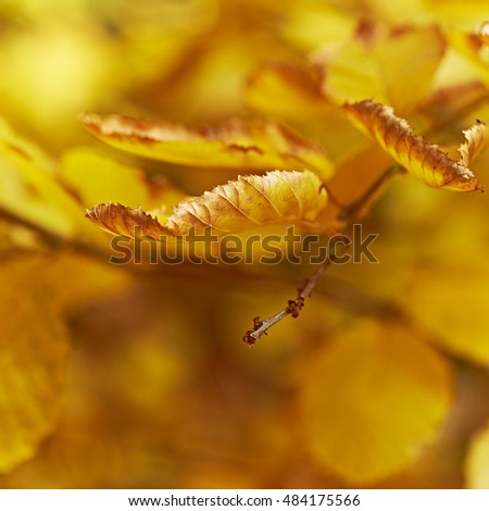 Autumnal nature background with colorful leaves