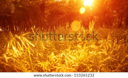 Autumnal park, beautiful golden dry grass field in the forest in sunny day, warm yellow sunset light, fall season, autumn nature  - stock photo