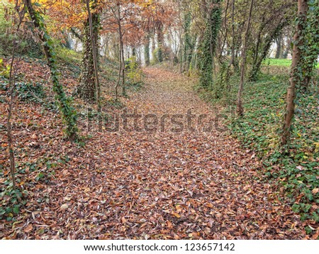 Autumnal pathway in a forest