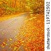 Autumnal scene - stock photo
