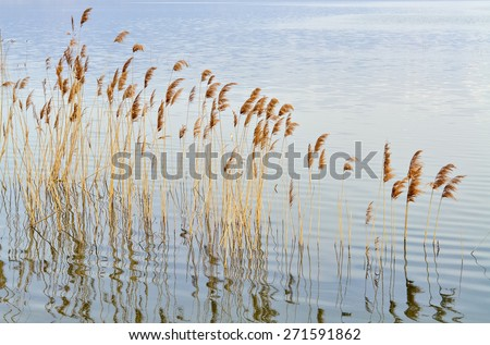 Autumnal scene of lake and reed in pastel colors - stock photo