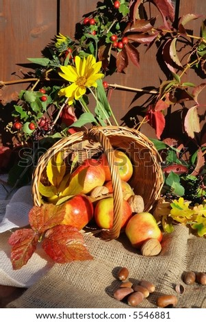 Autumnal still life with apple