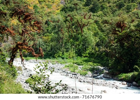 autumnal view of mountain forest in nepal - stock photo