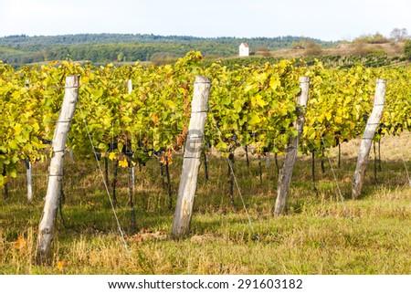 autumnal vineyard near Hnanice, Southern Moravia, Czech Republic - stock photo