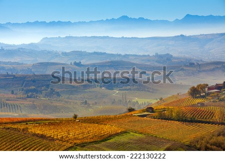 Autumnal vineyards and foggy hills on background in Piedmont, Italy. - stock photo