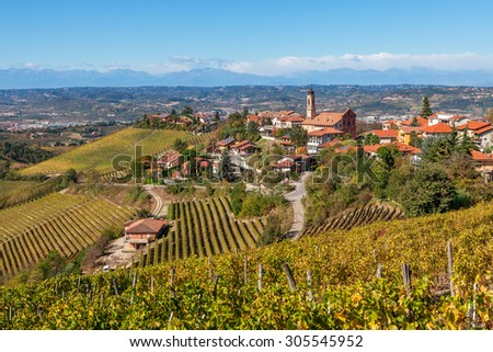 Autumnal vineyards and small town of Treiso on background in Piedmont, Northern Italy. - stock photo