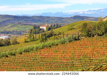 Autumnal vineyards on the hills of Langhe in Piedmont, Northern Italy. - stock photo