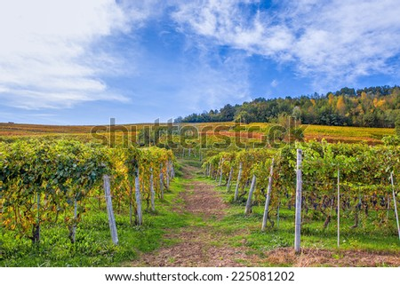 Autumnal vineyards on the hills under beautiful sky in Piedmont, Northern Italy. - stock photo