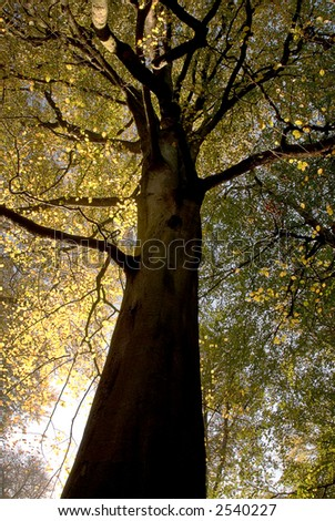 Autumnal woods - stock photo
