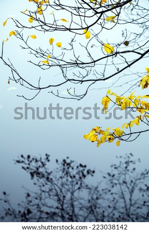 Autumnal yellow leaves on coastal trees with branches reflections in cold blue still lake water - stock photo