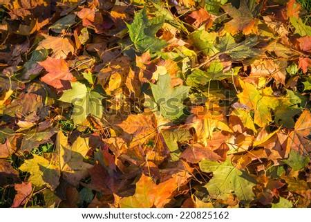 Autunm leafs - stock photo
