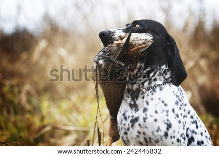 Duck Hunting Stock Photos, Images, & Pictures