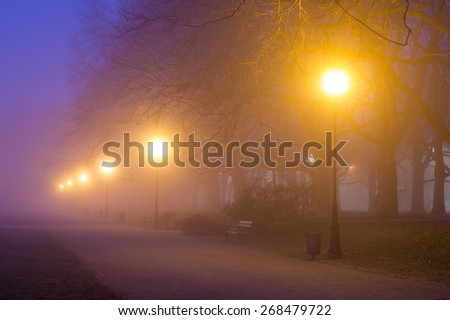 avenue of plane trees at night - stock photo