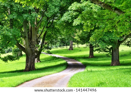 Avenue of trees with a road winding through - stock photo