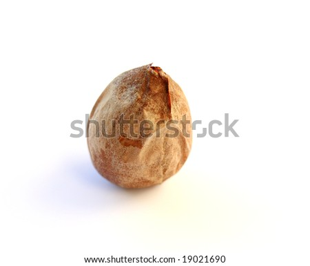 avocado pit - stock photo