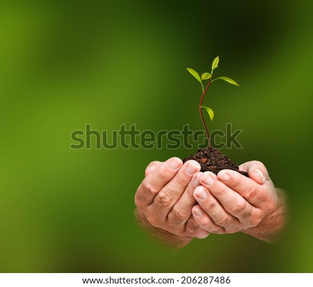 avocado sapling in hands as a gift of agriculture - stock photo