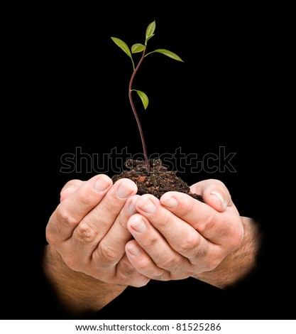 avocado sapling in hands as a symbol of nature protection - stock photo