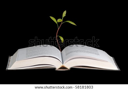 Avocado seedling growing from an open book