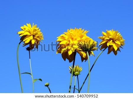 Awakening and flowering - stock photo
