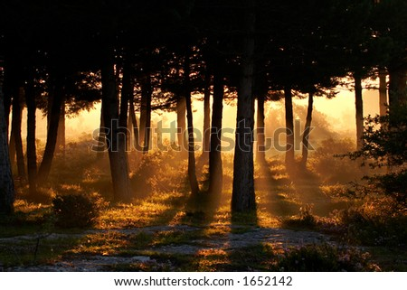 Awakening of day in the forest - stock photo