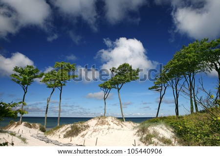 away to the beach, beach at baltic sea with blue sky in summer, some long green trees at the coastline - stock photo