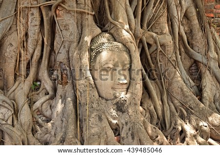 Ayutthaya, THAILAND - JuNE 19:2016.The well known image of the Head of the Buddha, with tree trunk and roots growing around it. Wat Mahathat, Ayutthaya.
