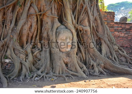 AYUTTHAYA, THAILANDi - 29 December, 2014 : Head of Sandstone Buddha in the tree roots at Wat Mahathat, This is an amazing attraction in Ayutthaya and became the world heritage by UNESCO