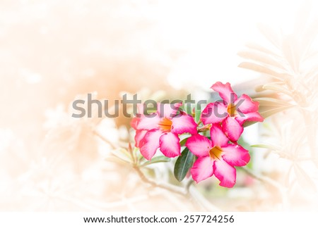 azalea,flower Made with blur style for background