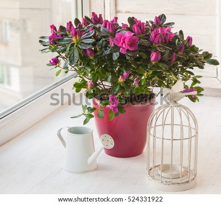 Azalea in a pot near the watering can and vintage decorative candle-birdcage