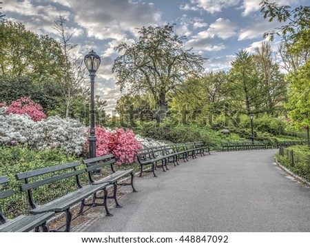 Azaleas in Central Park in the Early Morning on spring day - stock photo