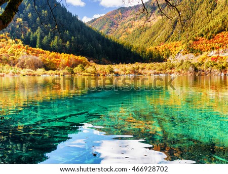 Azure crystal clear water of lake among autumn woods, the Shuzheng Valley, Jiuzhaigou nature reserve (Jiuzhai Valley National Park), China. Amazing submerged tree trunks are visible on bottom of pond.