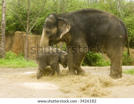 baby and mother elephant on display in a zoo