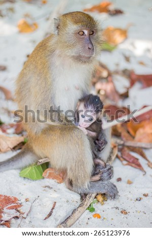 baby and mother monkey - stock photo