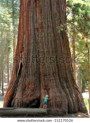Baby and the Giant. Little toddler girl hugging the giant sequoia. Man and the Nature concept. - stock photo