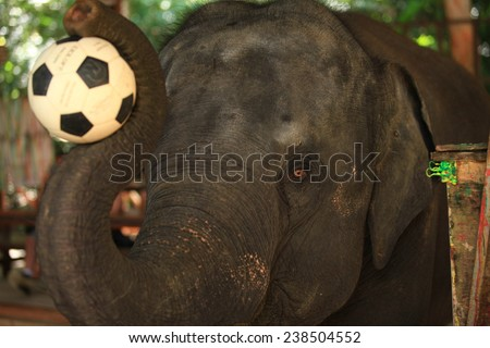 baby and young elephant - stock photo