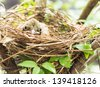 Baby bird in a nest on tree - stock photo