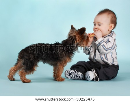 baby boy and yorkie dog, blue backgound - stock photo