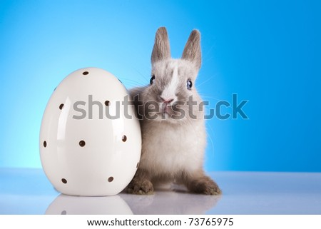 Baby bunny, Easter animal - stock photo