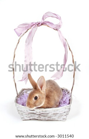 Baby bunny in easter basket on white. - stock photo